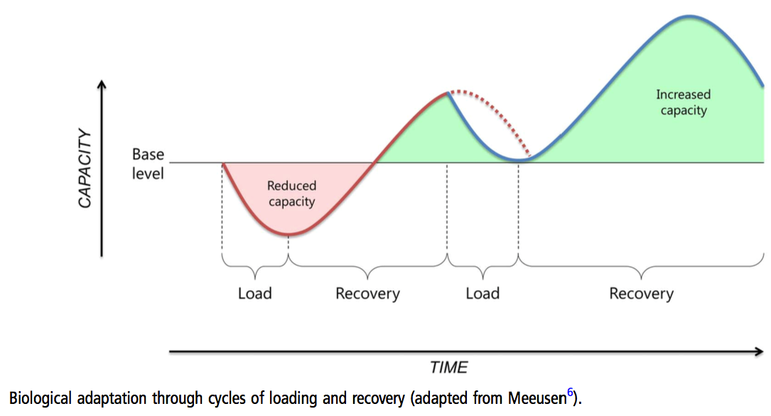 Biological adaptation through training and recovery cycles