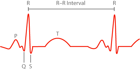 HRV in sports training RR intervals